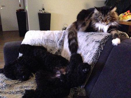Ich muss relaxen - und Izzy ist dabei!