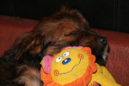 Luna-Koko