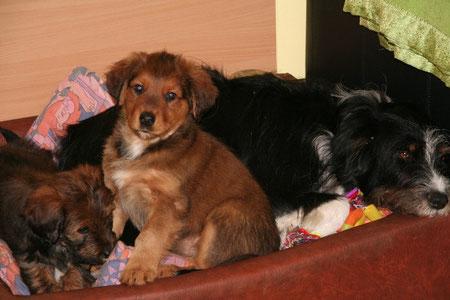 Luna-Koko und Limanu mit Mama