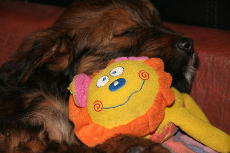 Luna-Koko - Schlafmaus
