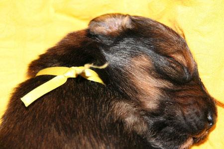 Luna-Koko - unsere Schlafmaus. Manchmal muss sie geweckt werden, damit sie dass Essen nicht verpasst.