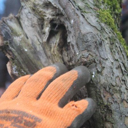 Sicher Baumpflege