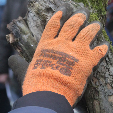 Sorgsame Baumpflege