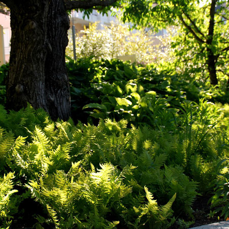Entretien de jardins jardin vivace for Entretien de jardins