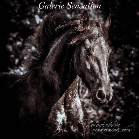 Un regard sur le cheval...