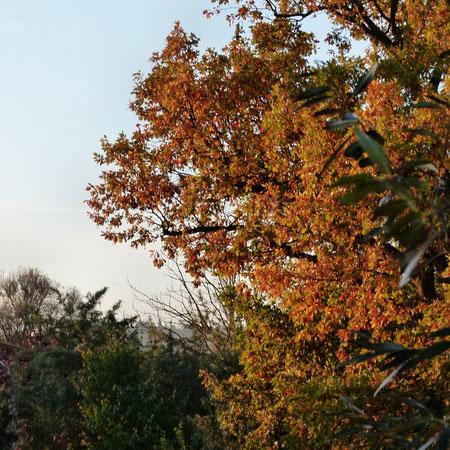 ein wunderschöner Blick aus meinem Fenster