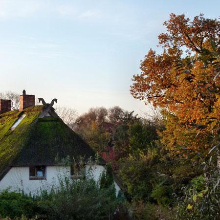 Auch der Herbst hat schöne Tage: Das Reetdachhaus meiner Nachbarin -