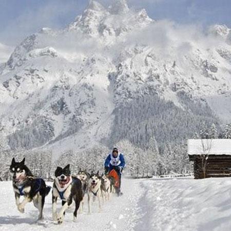 Bild: Das alljährliche Schlittenhunderennen findet im Jänner in Werfenweng statt