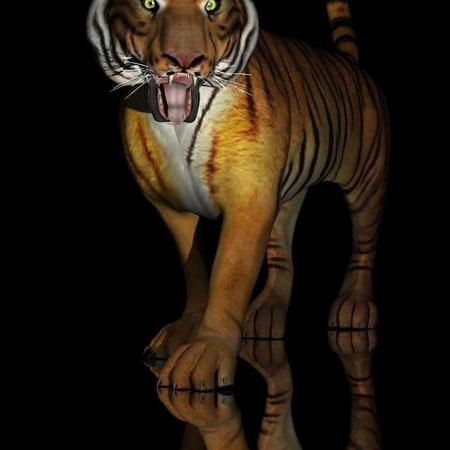Tiger, agro