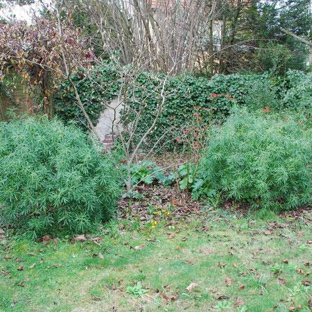 Des ligneux : Oranger du mexique (persistant) et magnolia (caduc)