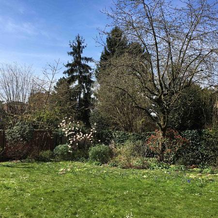 Point de vue du jardin en hiver : seuls les persistants affirment leur présence sombre