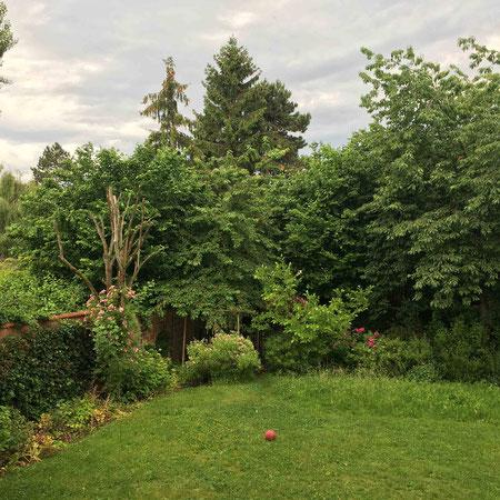 Point de vue du jardin en fin d'été : tout est en feuille. Les types de plantes caduques sont très présentes dans ce jardin.