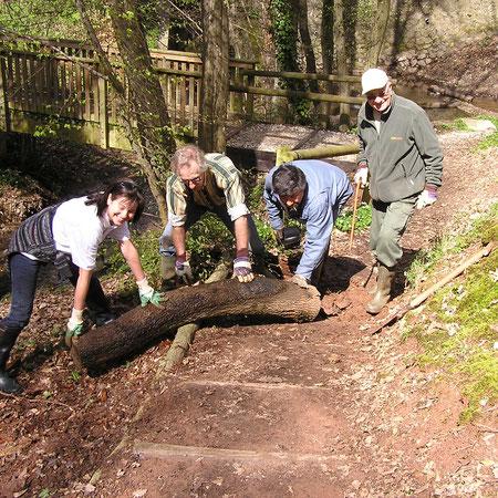 Sentier bois de Maligny
