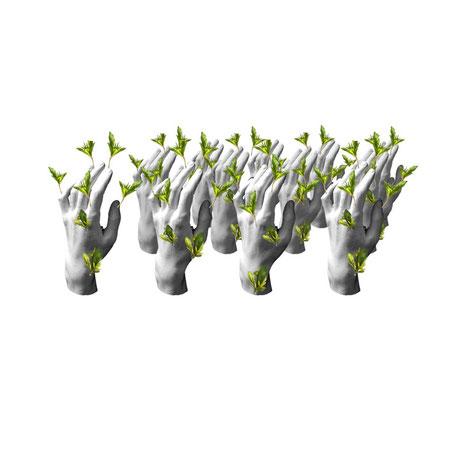 Manus Plantus (main-plante) Aline Siffert