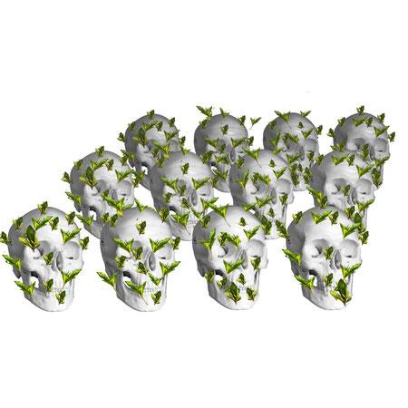 Cranae Plantus (crâne-plante) Aline Siffert