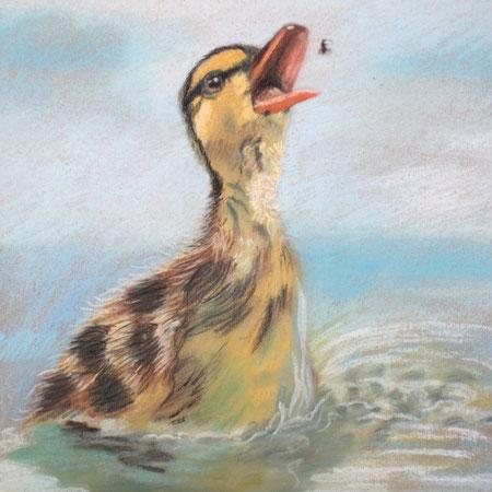 Pastellbild Entchen mit Mücke, gezeichnet, Zeichnung mit Tier