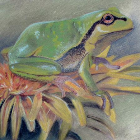 Pastellbild Frosch auf Blume, gezeichnet, Zeichnung mit Tier