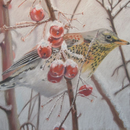 Pastellbild Wacholderdrossel im Winter, gezeichnet, Zeichnung mit Tier