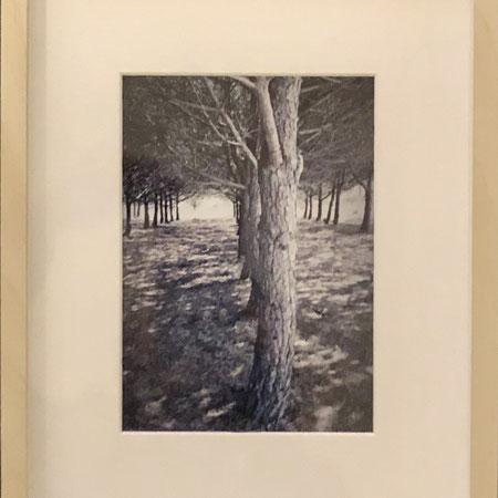 "Originalfoto  ""Allée""  | 32x23 cm  |  CHF 30.00 (inkl. Rahmen)"