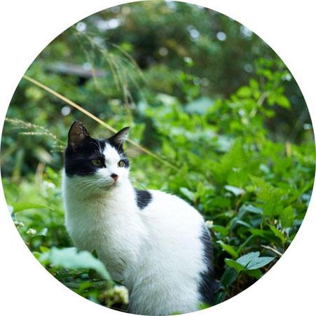島結の看板娘エディ,あごだし,トビウオ,猫好き,ペットフード,キャットフード,グレインフリー,無添加