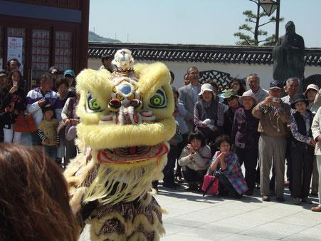 【邪気を払い、幸福を呼ぶ】中国獅子舞の勇壮な舞 邪気払いに頭を噛んで廻りました