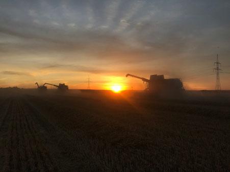 Weizenernte 2020 Magdeburger Börde Deumeland-Kather
