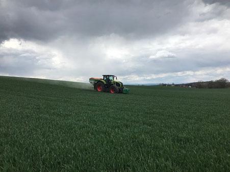 Düngung zum Vegetationsbeginn in der Magdeburger Börde Deumeland-Kather