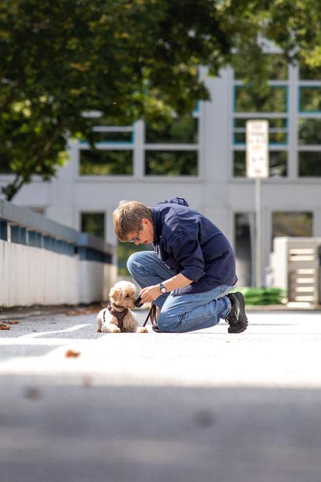 Apportieren Mantrailing Hund hinter Säule Personensuche Beschäftigungskurse