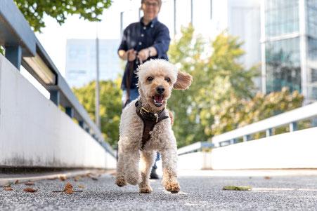 Bild für Beschäftigungskurse Hund hinter Säule Mantrailing und Apportieren