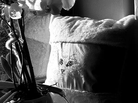 Katzenportrait aus Strass