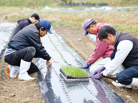 高齢者や障がい者と一緒に、野菜、果物、薬草などを栽培している様子 1