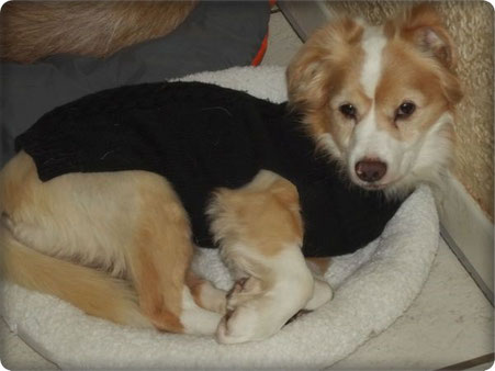 ... und auch Lolo freute sich über den kuscheligen Pullover ;-))