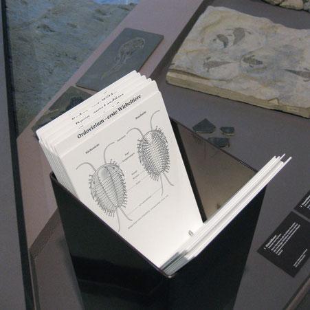 Viele der Illustrationen, wie hier die Anatomie des Trilobits, werden in Fächern gezeigt. © Michael Stünzi