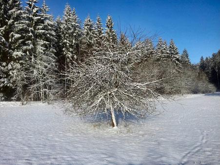 Ein schöner Wintermorgen