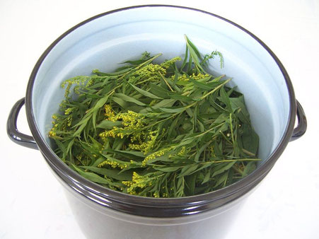 Canadian Goldenrod, prepared for dyeing.
