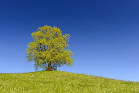 einzelner Baum auf einem Hügel - Resilienz - Gruppenkurse / Workshops