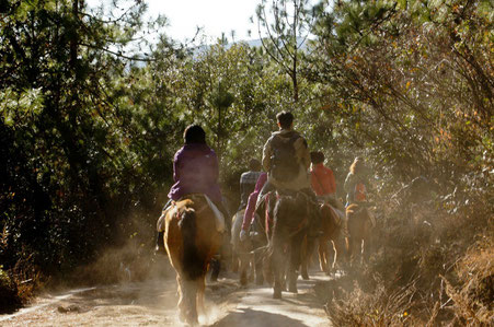 Istria top things to do - Horse Riding - Copyright blese