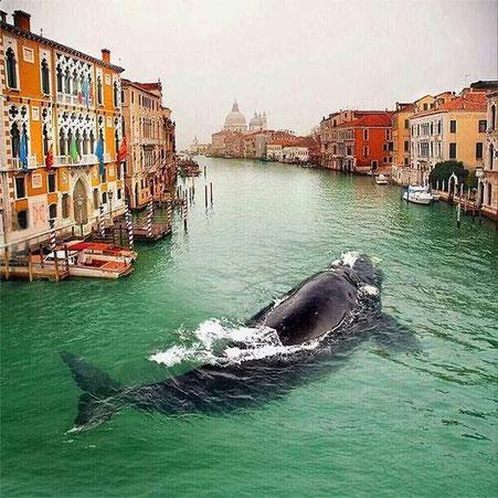 Les baleines nous permettent d'aller dans les couloirs du temps. C'est aussi grâce à leur enseignement que je peux vous aider à créer un futur harmonieux !
