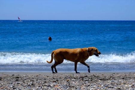 Photographie, Espagne, Andalousie, cabo de gata, plages, collines, Playa de San Miguel, mer, vagues, chien, écume, nuages, blanc, bleu, terre, lumière,été, vacances, Mathieu Guillochon