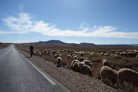 Troupeau de mouton et berger