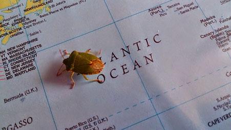 ~ Bild: Frühsommerlicher Käfer in unserem Büro ~