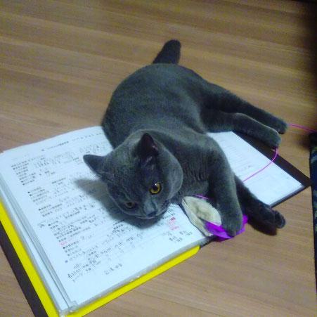 大田区 ペットシッター キャットシッター ペットのお留守番 ペットのお世話 川崎 猫 ねこ ネコ にゃんこ シッターお問い合わせ