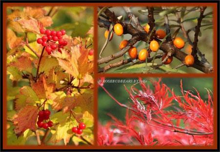 Herbst - Sanddorn und Ahorn