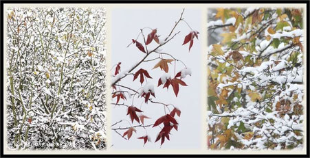 die letzten Blätter hängen noch - Farbe im Schnee
