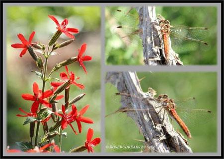 die zarte Schönheit einer Libelle auf dem dornigen Stängel einer Distel