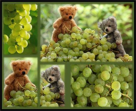 Norvin und Jolene bei der Weinlese - die leckeren Trauben sind ein Geschenk aus Franken