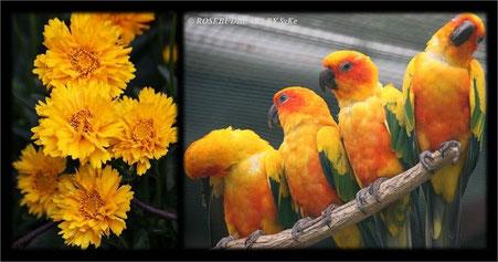 Papageien und Herbstblumen