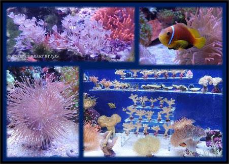Aquarien im Sea-Life Hannover