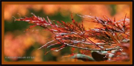 Herbst am Freitag, dem dreizehnten