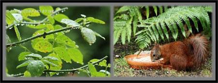 nass: Hemmi Hermine Eichhorn mit Sonnenblumenkernsuppe - da hilft auch das Farnblatt nicht